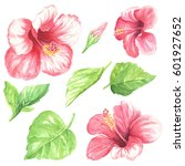watercolor flowers with leaves  ... | Shutterstock . vector #601927652