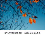Orange Leaves Tree Branch ...