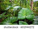 Thick Jungle Green Leaves...