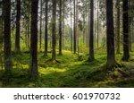 Forest Background. Dark Forrest ...