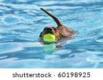 dog at a pool - stock photo