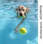 Stock photo dog at a pool 60198958