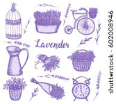 graphic sketches with lavender. ...   Shutterstock .eps vector #602008946