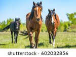 horse herd in summer field... | Shutterstock . vector #602032856