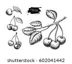 cherry vector drawing set.... | Shutterstock .eps vector #602041442