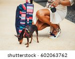 Stock photo summer lifestyle portrait of woman travelling with pocket dog and stylish suitcase wearing stylish 602063762
