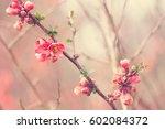 tree flowers  | Shutterstock . vector #602084372