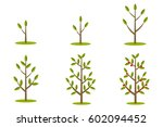 phases of plant growth  plant... | Shutterstock .eps vector #602094452