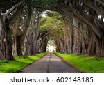 beautiful cypress tunnel on the ... | Shutterstock . vector #602148185