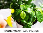 Humidification Of Plants