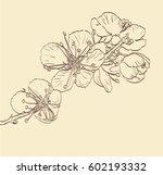 blossom spring tree flowers.... | Shutterstock .eps vector #602193332