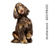 Stock photo studio shot of an adorable english cocker spaniel sitting on white background 602198102