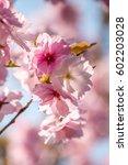 spring   Shutterstock . vector #602203028