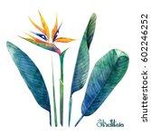 watercolor strelitzia... | Shutterstock . vector #602246252