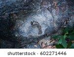 Human Footprint Barefoot On A...