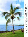 palm tree with blue sky. sunny... | Shutterstock . vector #602285126