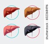 organ illustration  livers | Shutterstock .eps vector #602368496