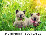 Stock photo two little kittens wearing bow tie lying in a basket on the grass in summer 602417528