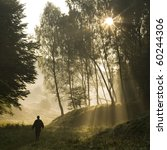 Walk Along The Forest In The...