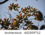 jeju island | Shutterstock . vector #602509712