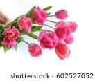 pink tulips isolated on white. | Shutterstock . vector #602527052