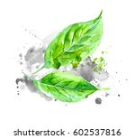 green watercolor leaves with... | Shutterstock . vector #602537816