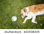the dog lies on its side on the ... | Shutterstock . vector #602538335