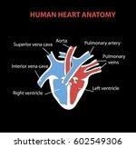 human heart anatomy on black.... | Shutterstock .eps vector #602549306