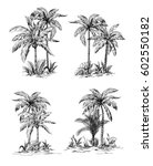 set tropical palm trees with... | Shutterstock .eps vector #602550182