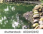 Turtles At The Iron Pagoda Par...