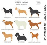 working  watching  dog breeds... | Shutterstock .eps vector #602661302