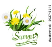 lettering summer chamomile herb ... | Shutterstock .eps vector #602745146