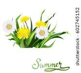 lettering summer chamomile herb ... | Shutterstock .eps vector #602745152