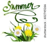 lettering summer chamomile herb ... | Shutterstock .eps vector #602745266