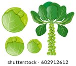green cabbages and brussel... | Shutterstock .eps vector #602912612