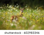 spring in the nature. roe deer  ... | Shutterstock . vector #602983346
