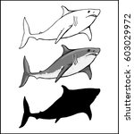 white shark in 3 versions ... | Shutterstock .eps vector #603029972