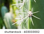 Exotic Plants. Close Up Of A...