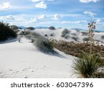 Gypsum Dune Field With Yucca...