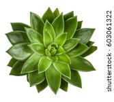 Succulent Plant Top View ...