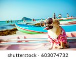 cute chihuahua dog wearing... | Shutterstock . vector #603074732