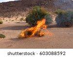 Dry Burning Bush In The Sahara...