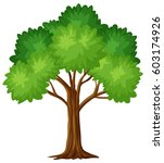 Green Tree On White Background...