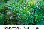 a group of miniature succulent... | Shutterstock . vector #603188102