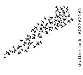 bird flock  vector flying birds ... | Shutterstock .eps vector #603262565
