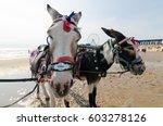 donkeys on blackpool beach ...   Shutterstock . vector #603278126
