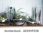 florarium in glass vases with... | Shutterstock . vector #603349328