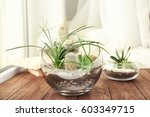 florarium with succulents and... | Shutterstock . vector #603349715