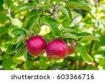 voorheesville  ny. sept. 2015   ...   Shutterstock . vector #603366716