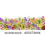 colorful spring flowers... | Shutterstock . vector #603373646